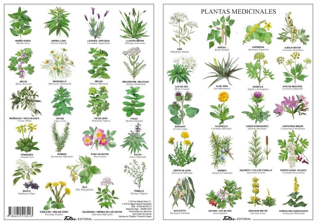 El uso de las plantas medicinales agronomos udg 73 78 for Plantas ornamentales para colorear